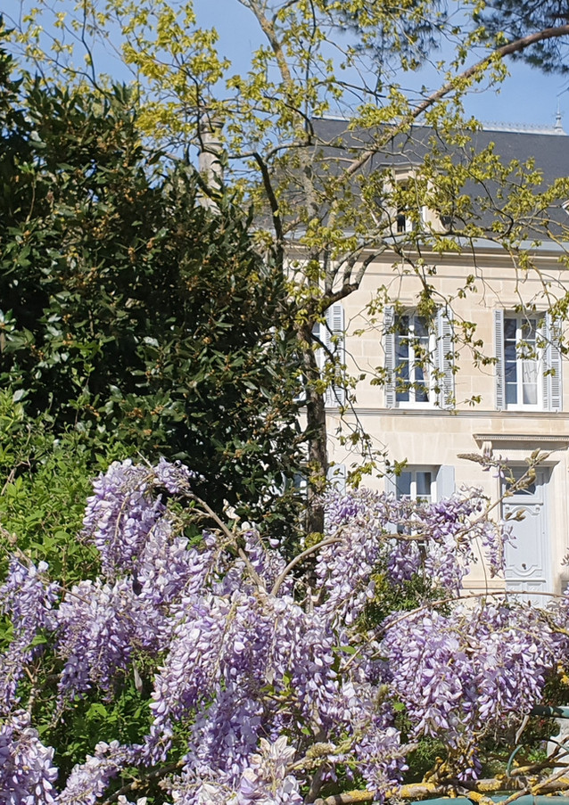 The Manor House with spring wisteria