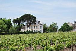 house vines.jpg