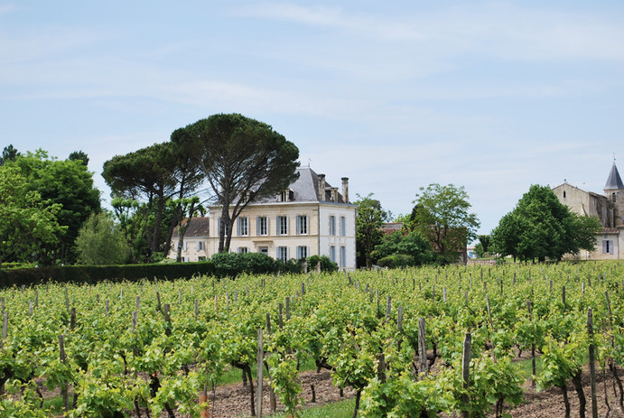 View of the Manor across the vines