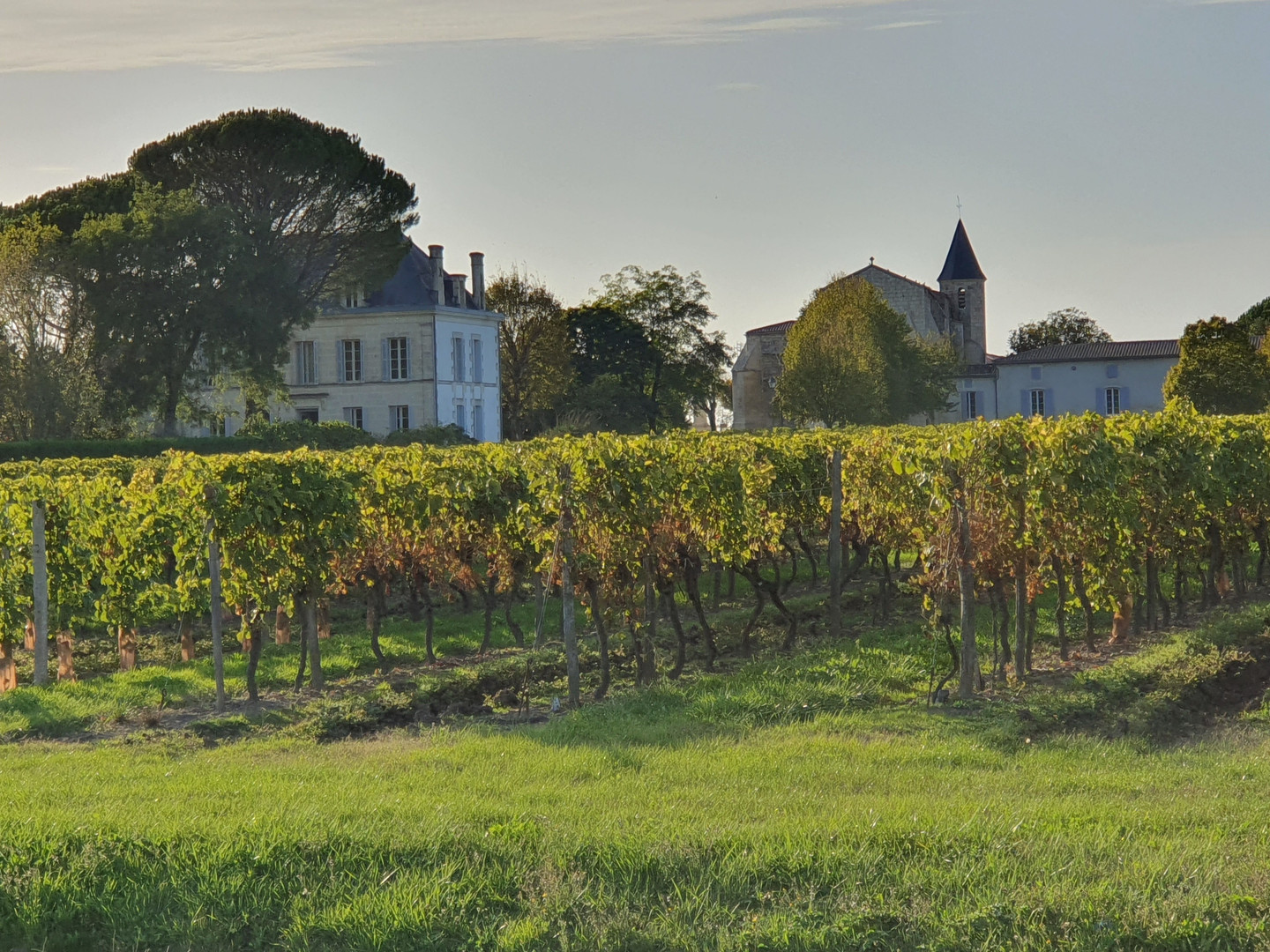 Le Logis from across the vines.