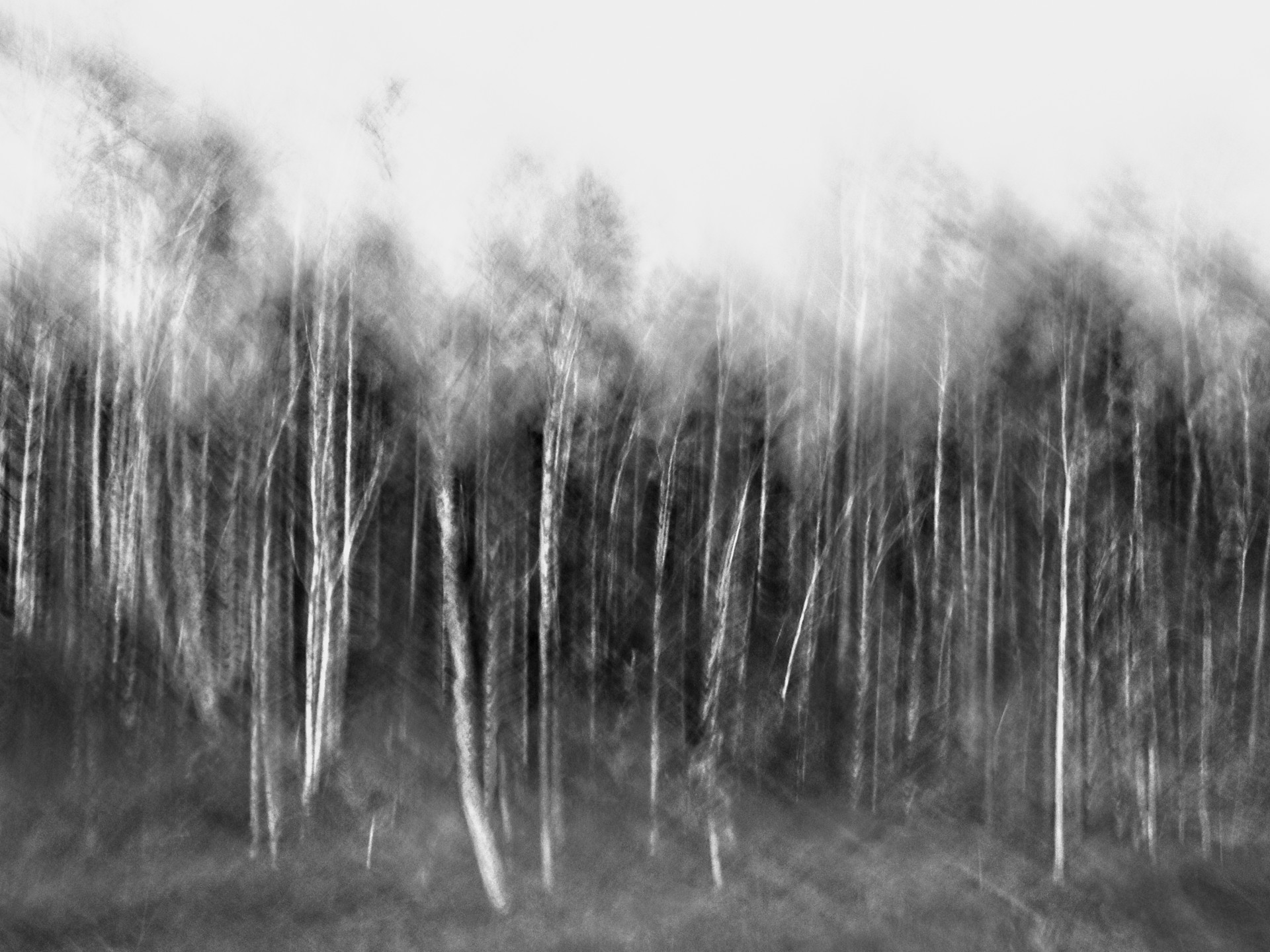 BirchImpression