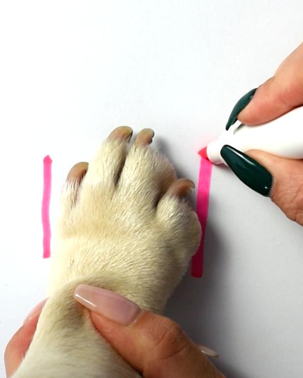 RIFUF Dog Shoe Size Guide Step 2