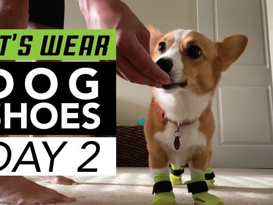 Dog Shoe Training, Part 2