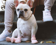 French Bulldog Outside Wearing Blush RIFRUF Caesar 1 Dog Shoe