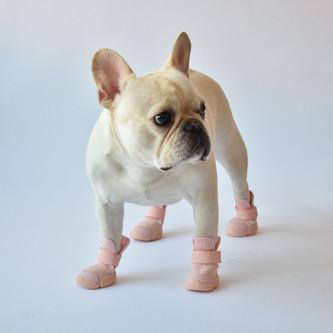French Bulldog in Studio Wearing Blush RIFRUF Caesar 1 Dog Shoe
