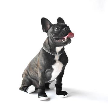 Black French Bulldog Wearing Black RIFRUF Caesar 1 Dog Shoe