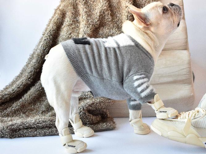 French Bull Dog Wearing Grey Sweater and Bone RIFRUF Caesar 1 Dog Shoe