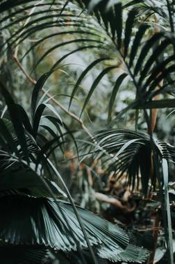 Nicky-Gennburg-Photography-Biosphere-Pot