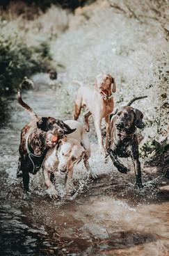 Nicky-Gennburg-Photography-Kaskelhunde.j