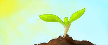 זרעים של תקוה