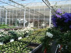 Fellner Blumen blühendes Glashaus
