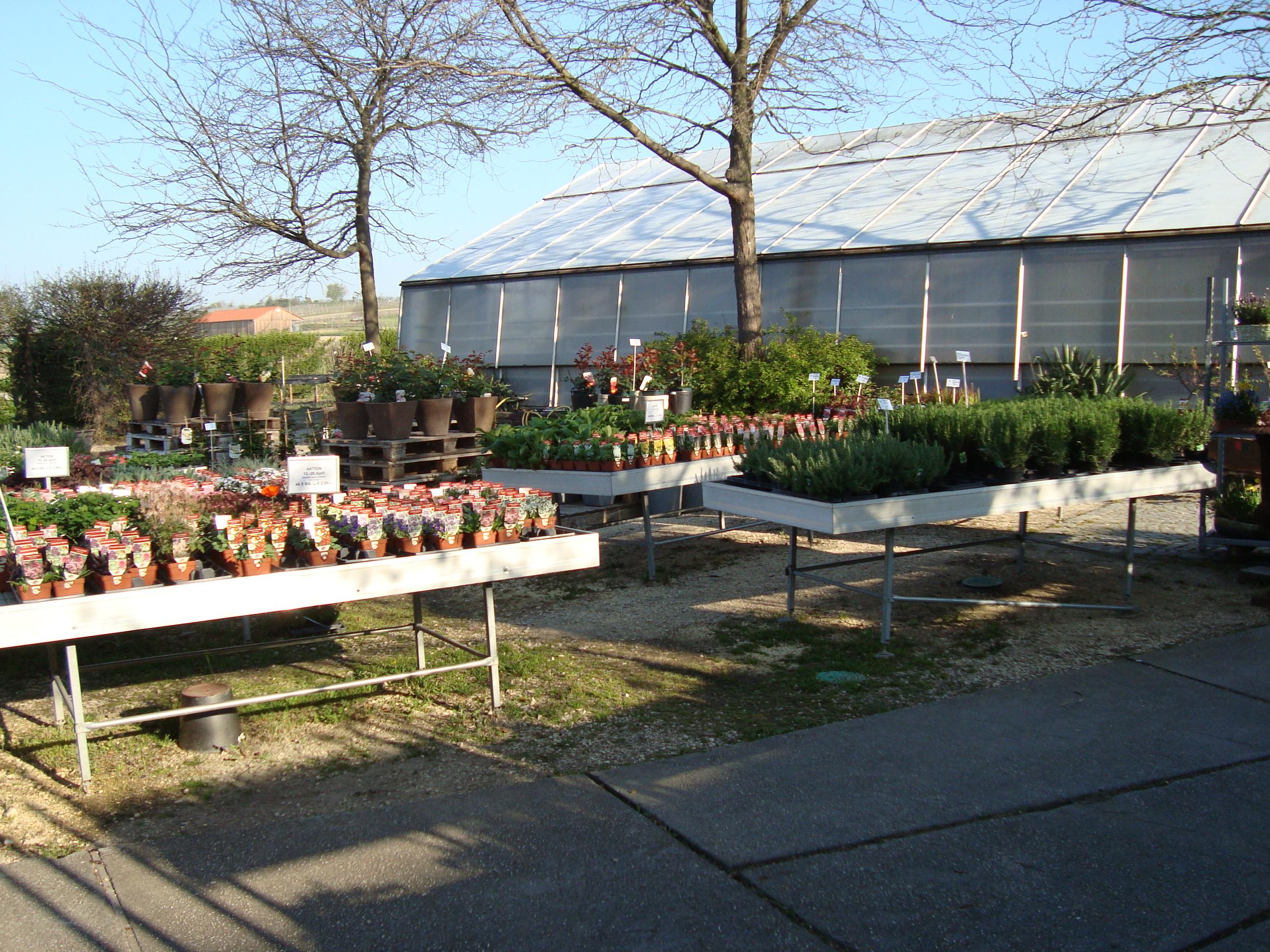 Fellner Blumen Bockfließ Garten