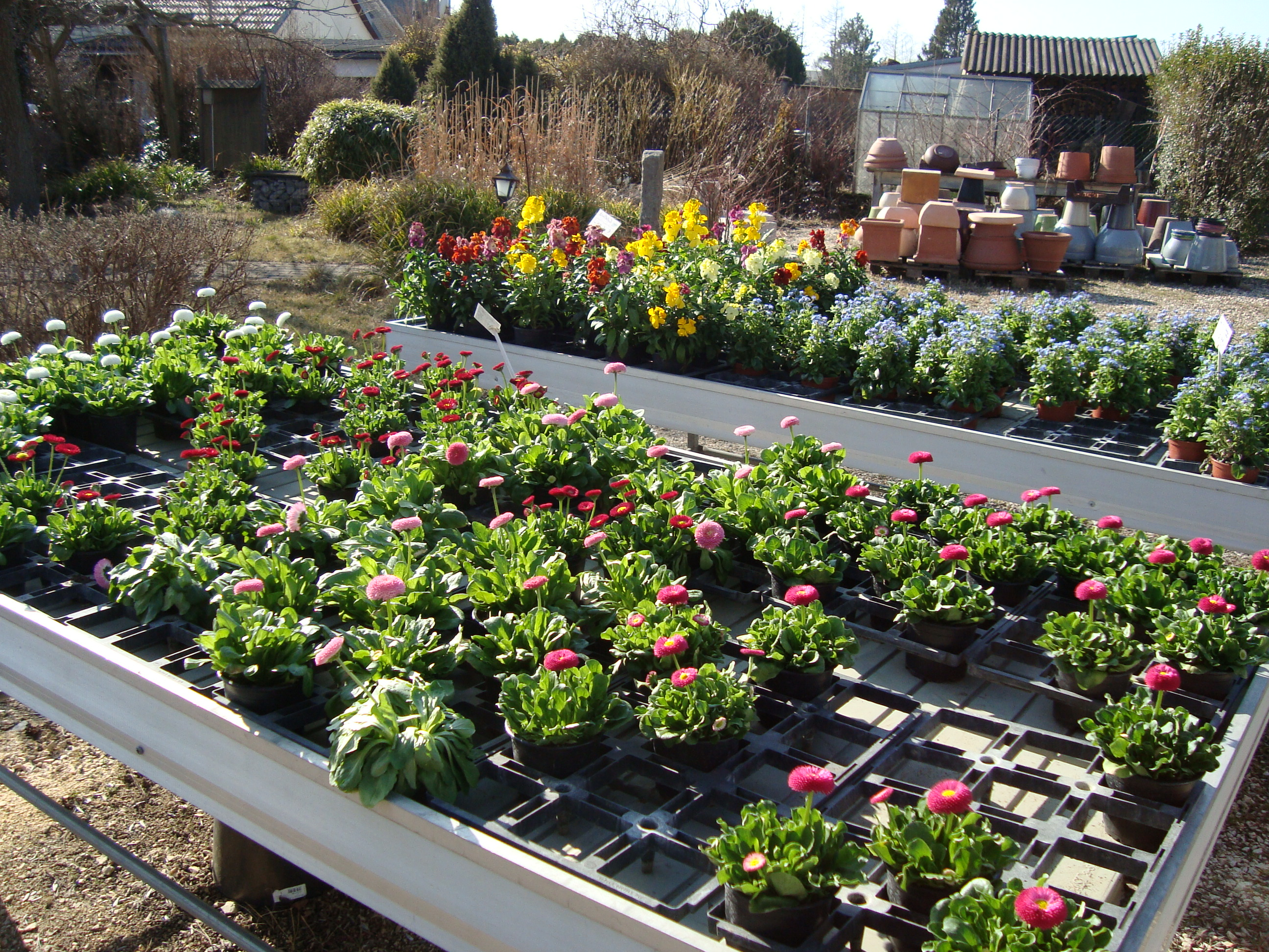 Fellner Blumen Garten