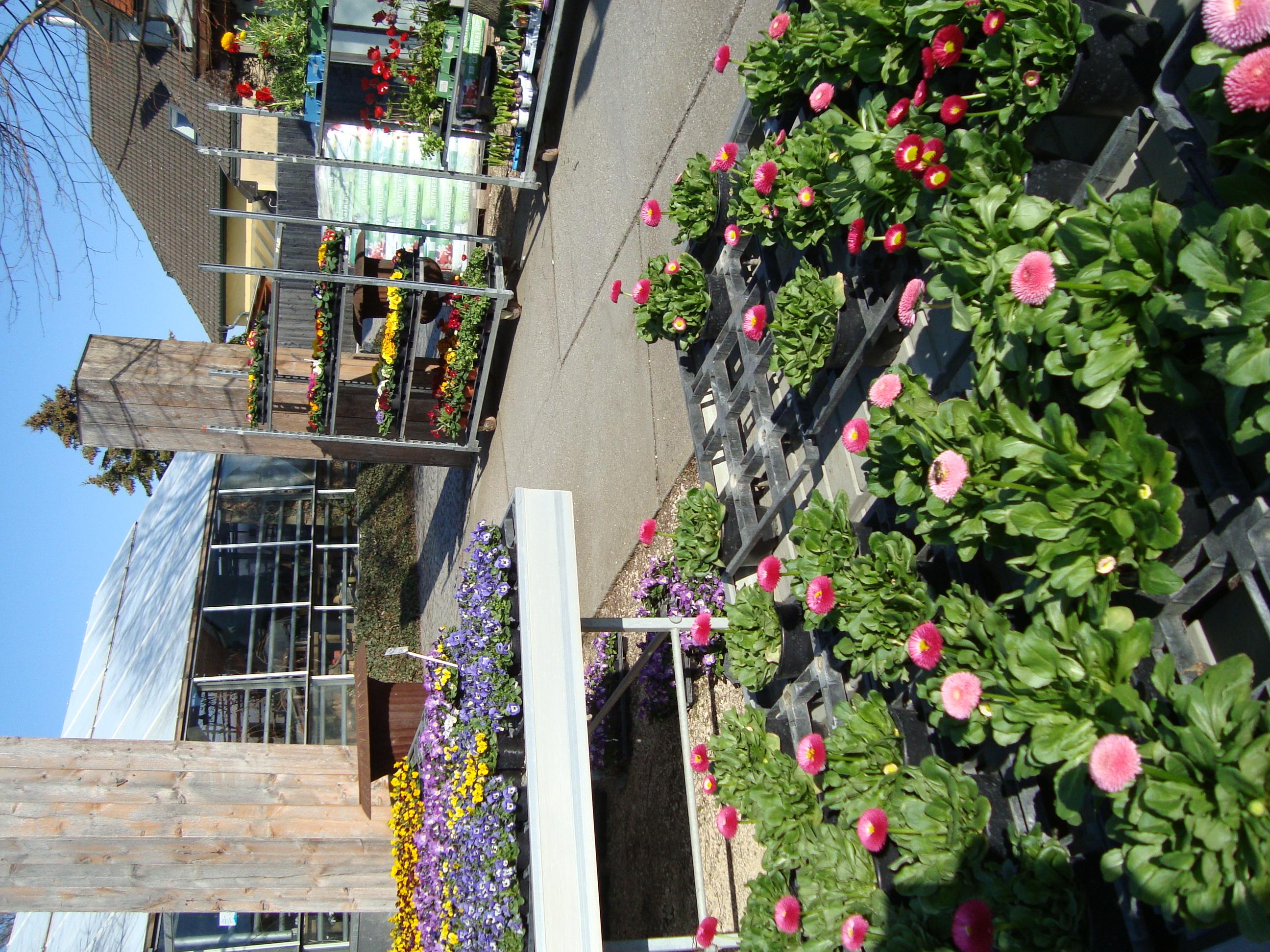 Fellner Blumen Beet- und Balkonblumen