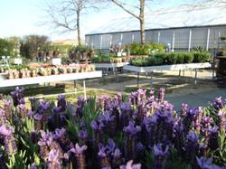 Fellner Blumen Garten Bockfließ