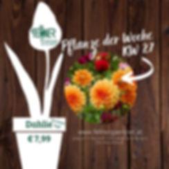 Pflanze der Woche KW 27.jpg