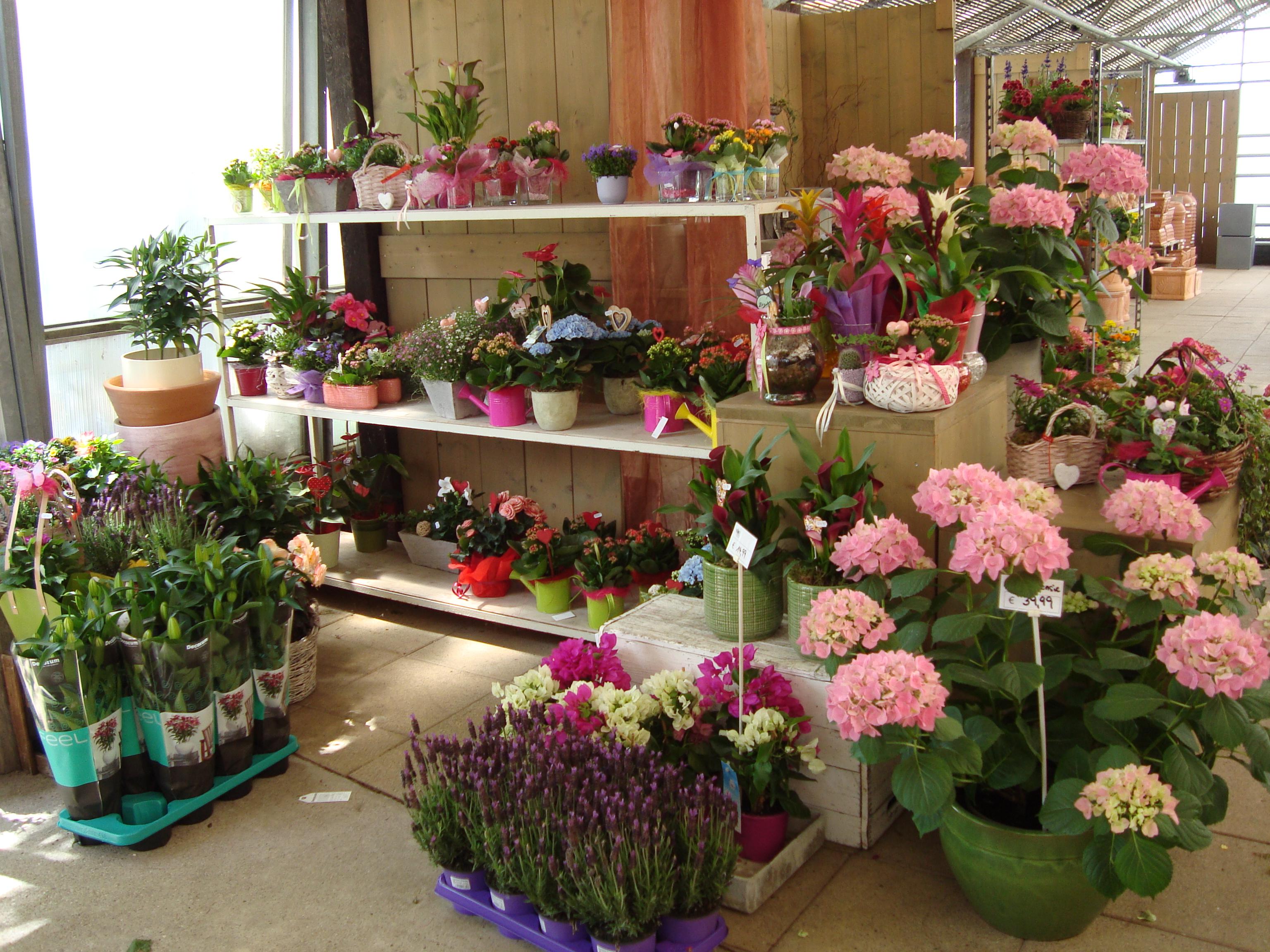 Fellner Blumen Frühjahr