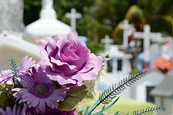 Fellner Blumen lila Blume Hintergrund