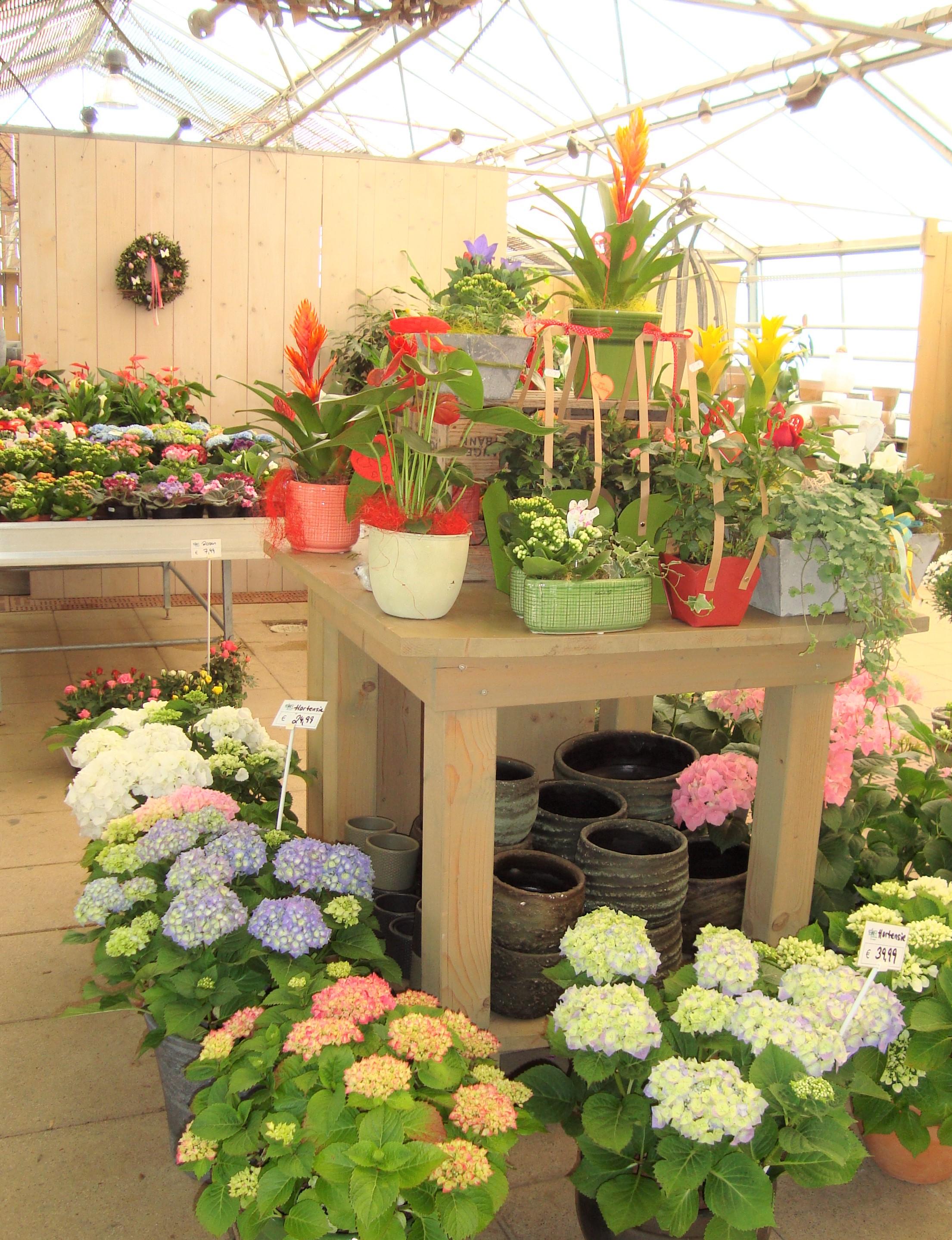 Fellner Blumen Einblick
