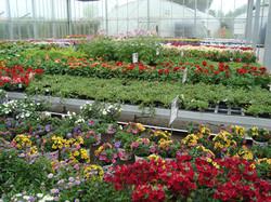 Fellner Blumen Glashausinspiration