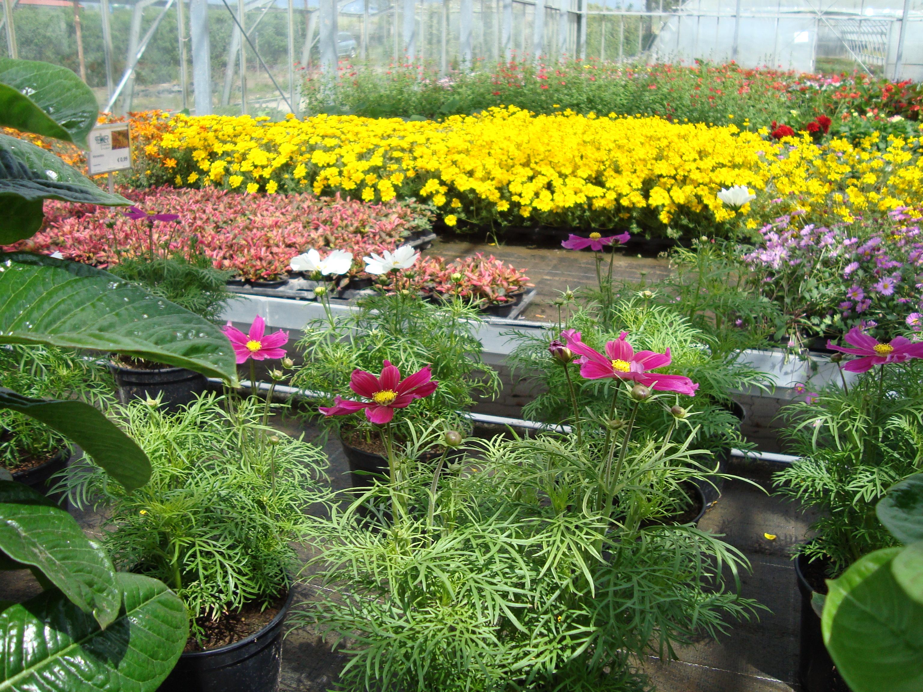 Fellner Blumen Glashauseinblick