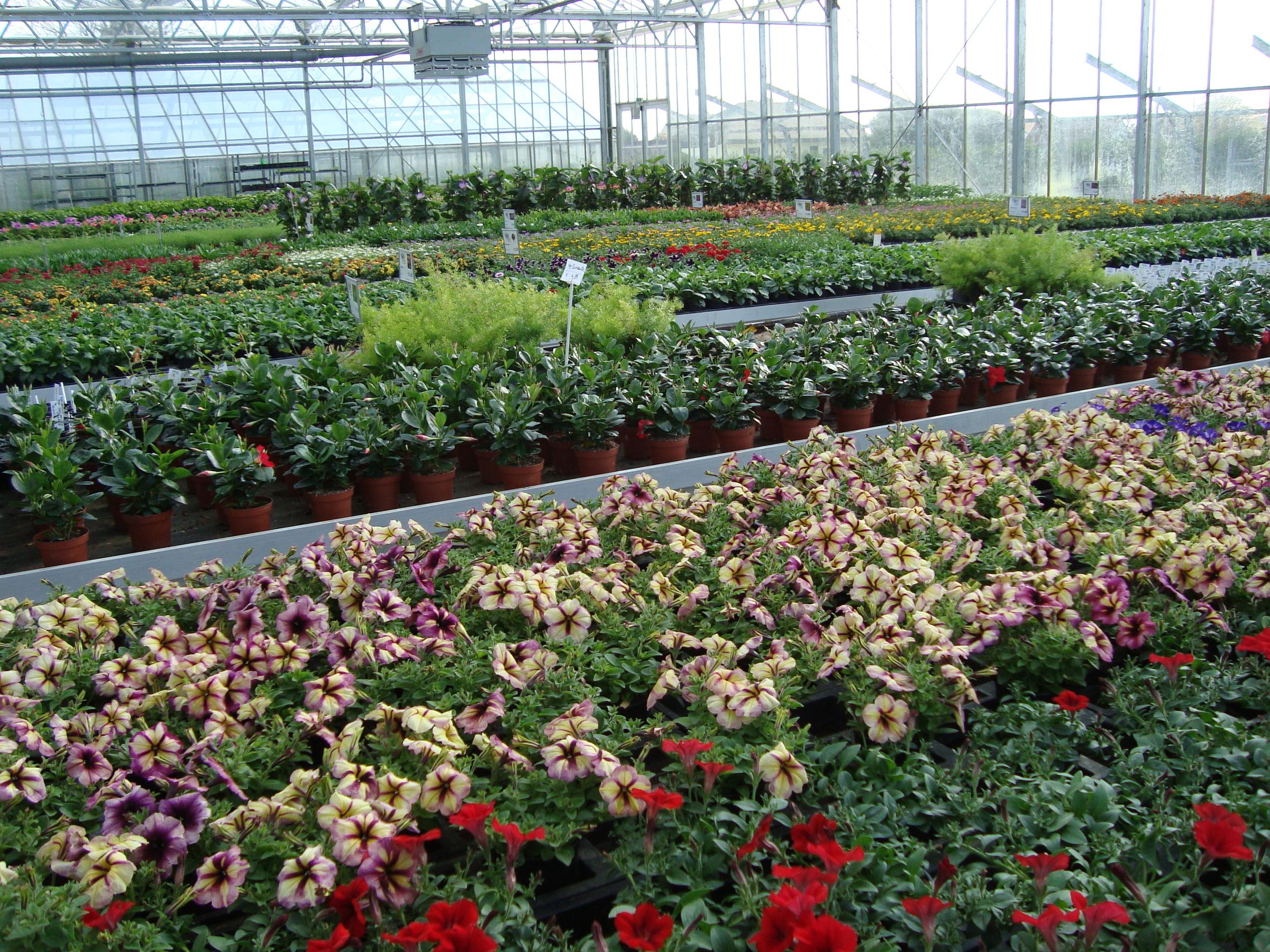 Fellner Blumen Einblick ins Glashaus
