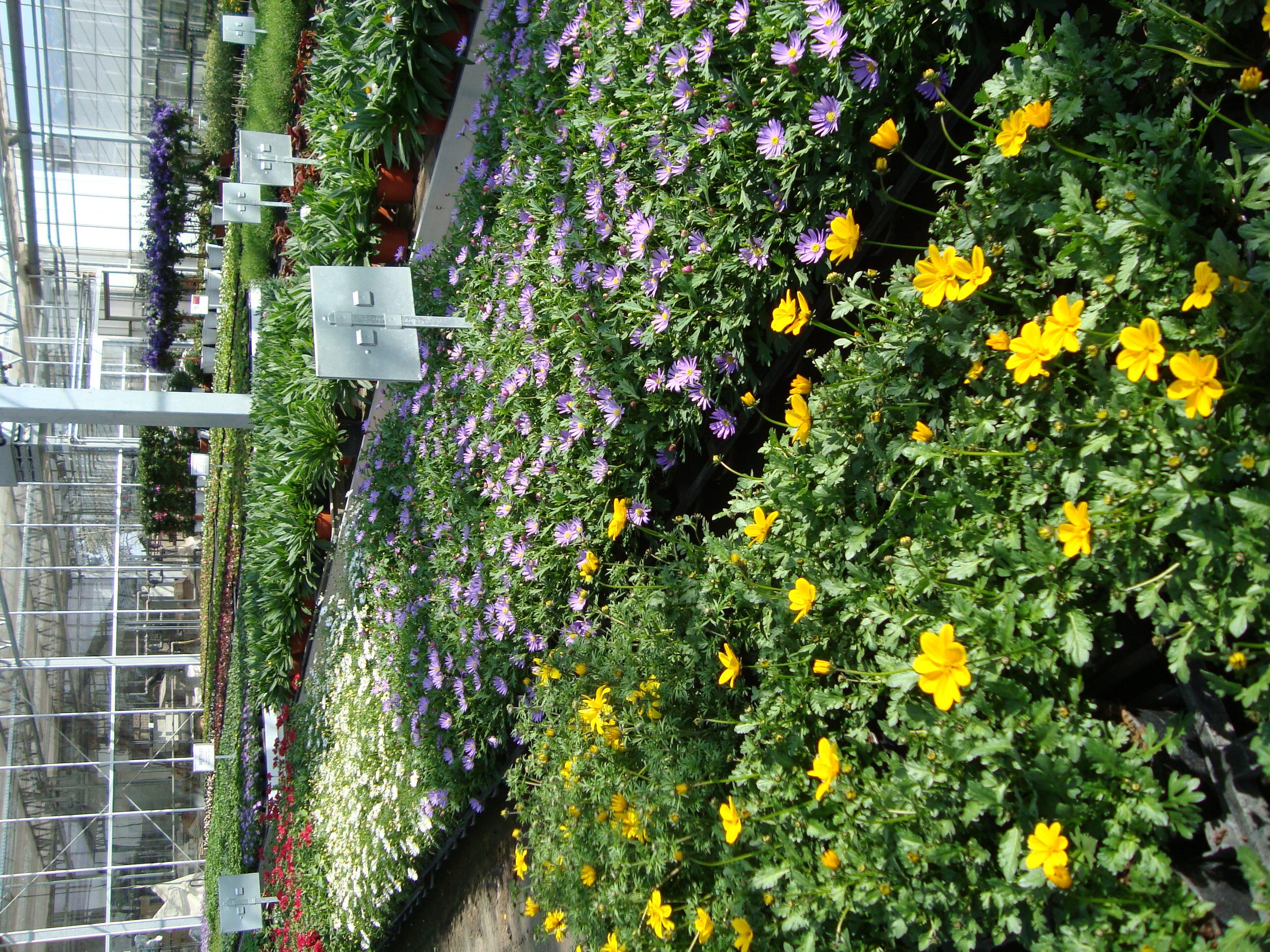 Fellner Blumen Sommerblumen