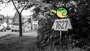 smokingbird copy.jpg