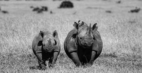 Holidaying in Kenya