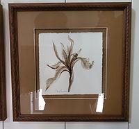 Crested Iris.jpg