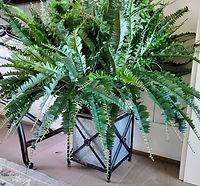 Ferns and Planter.jpg