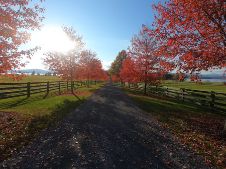 Fall in Vermont: The Ultimate Local's Guide