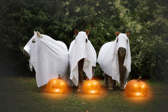 Halloween38.jpg
