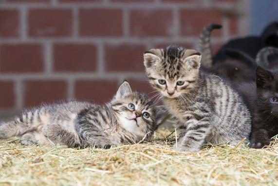 Katze95.jpg
