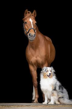 Hund_Pferd001.jpg