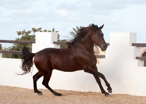 Berber61.jpg