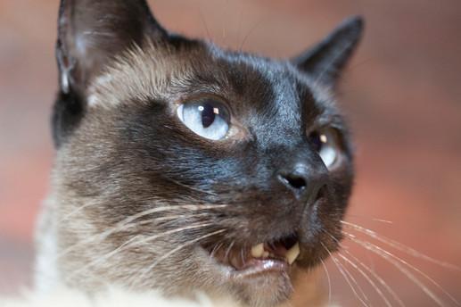 Katze117.jpg