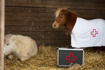 Dr.Pony031.jpg