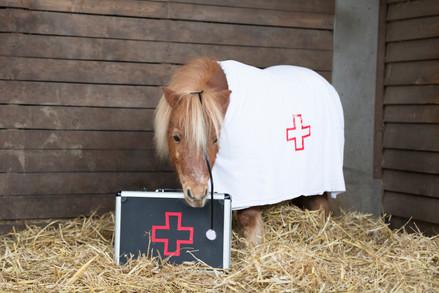 Dr.Pony009.jpg