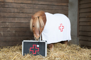 Dr.Pony006.jpg