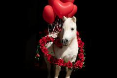 Valentinstagpony006.jpg
