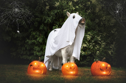 Halloween44.jpg