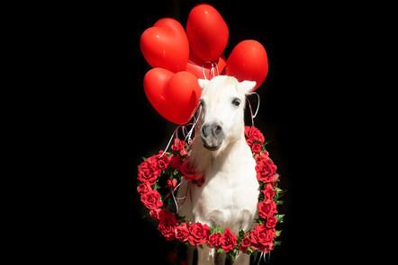 Valentinstagpony007.jpg