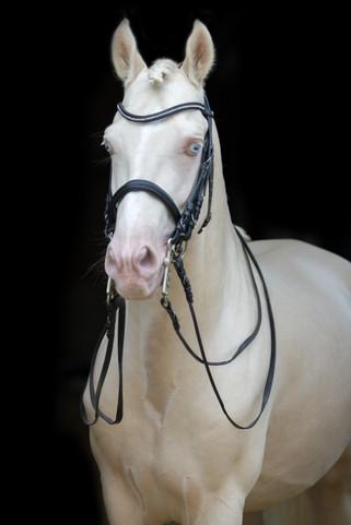 Ponyhengst14.jpg