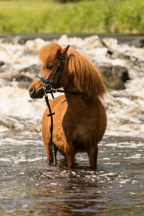 Pony156.jpg