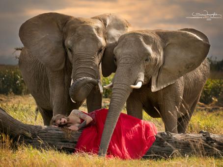Shooting mit Elefanten oder Zebras