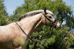 Pony171.jpg