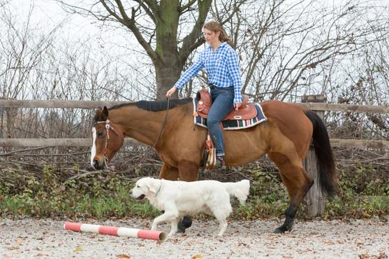 HorseDogTrail96.jpg