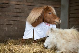 Dr.Pony018.jpg