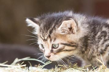 Katze108.jpg